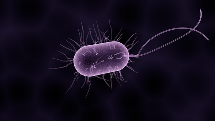 Gut Microbes Could Unlock the Secret to Healthy Aging