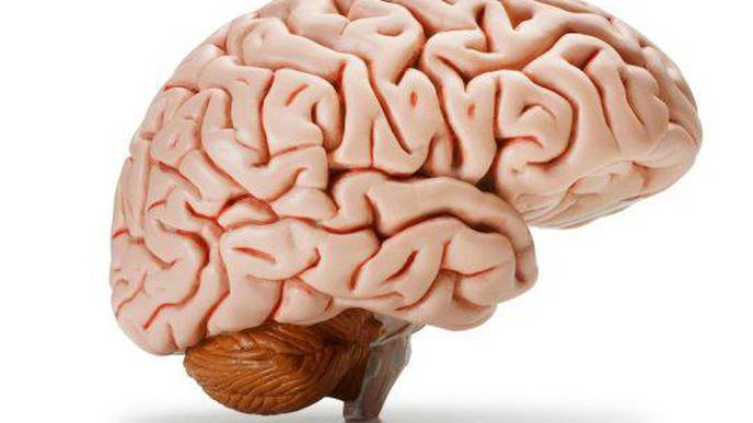 How Humans Develop Larger Brains Than Other Apes