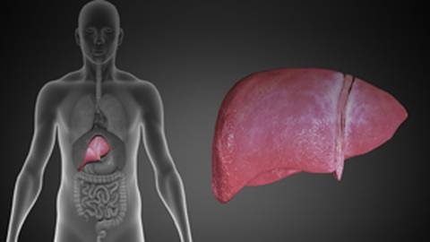 Pathogenesis and Management of Non-Alcoholic Fatty Liver Disease