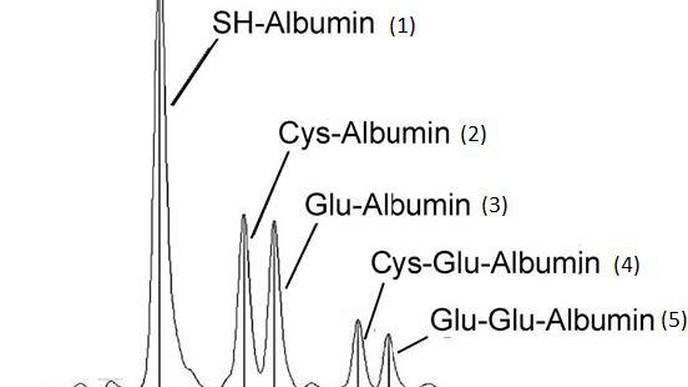 Cysteinylated Albumin New Early Diagnostic Marker for Diabetic Kidney Disease