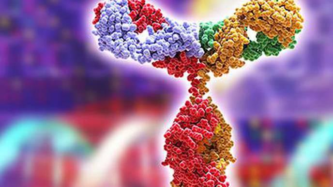 Neonatal Exposure to Antigens of Commensal Bacteria Promotes Broader Immune Repertoire
