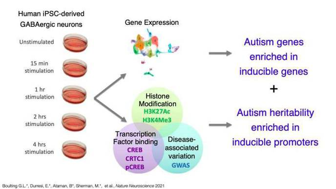 Study Offers New Insight About Gene Expression & Neurological Disease Heritability