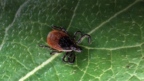 Beyond the Data: Emerging Tickborne Diseases