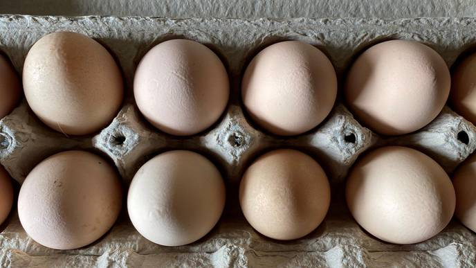 Backyard Chickens, Rabbits, Soybeans Can Meet Household Protein Demand
