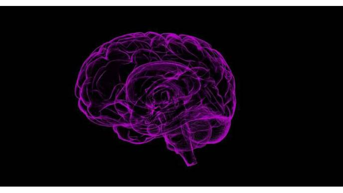 Locus of Male Sexual Desire Has Been Uncovered in the Brain