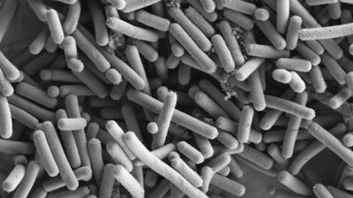 Research Shows a Few Beneficial Organisms Could Play Key Role in Treating Type 2 Diabetes