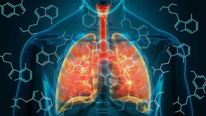 Beyond the Mouse Model: Yale Project Advances Treatments for Lung Disease
