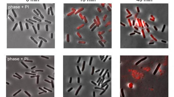 Scientists Reveal the Role of Retrons in Bacteria