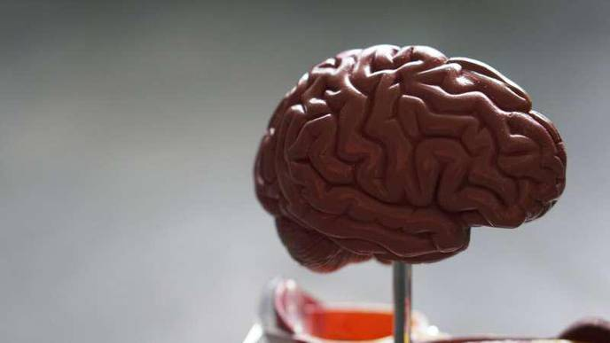 How Does Your Brain Process Emotions? Answer Could Help Address Loneliness Epidemic