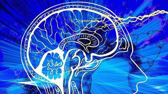 Brain Circuit Regulation May Help with Obesity