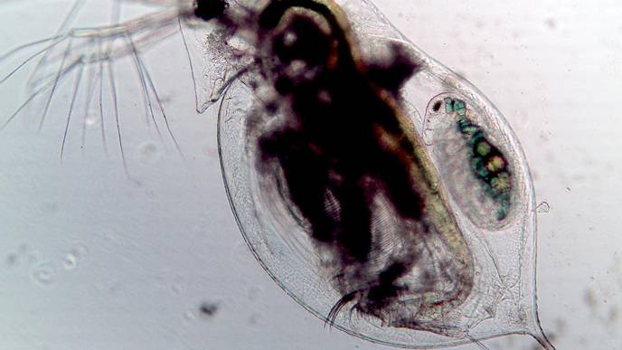 How Plankton Hold Secrets to Preventing Pandemics