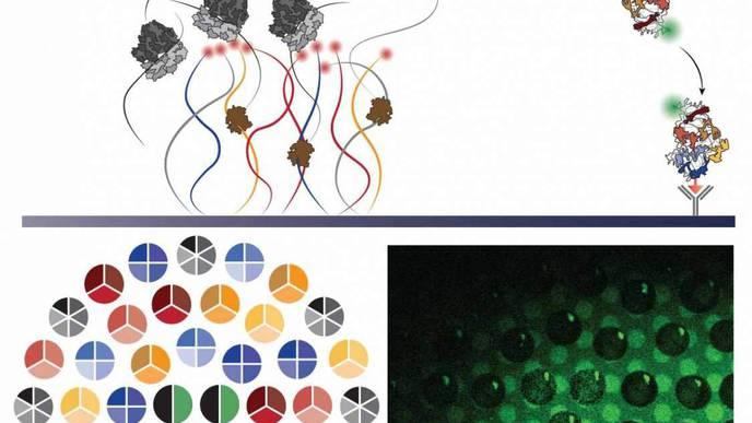 The Self-Synthesizing Ribosome