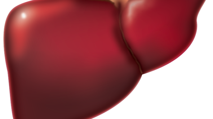 Study Introduces mRNA-LNP as a Safe Therapeutic Intervention for Liver Regeneration